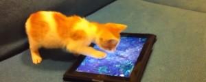 animalitos jugando con un ipad