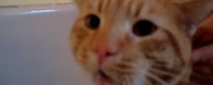 gato dice no al agua