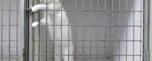 gato escapa de la jaula
