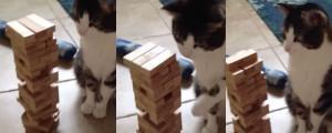 jenga-cat-gato-juega