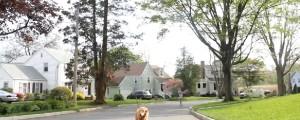 perro se pasea solo en el parque
