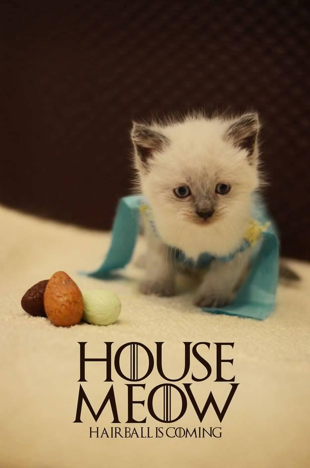 gatos disfrazados de personajes - daenerys targaryen - game of thrones 02