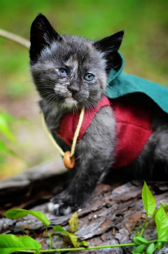 gatos disfrazados de personajes - frodo - lord of the rings 01