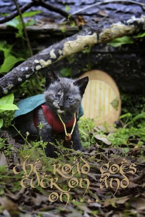 gatos disfrazados de personajes - frodo - lord of the rings 02
