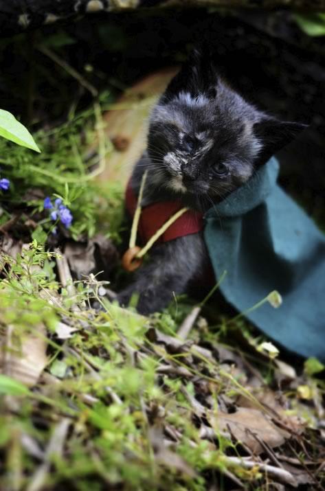 gatos disfrazados de personajes - frodo - lord of the rings 03