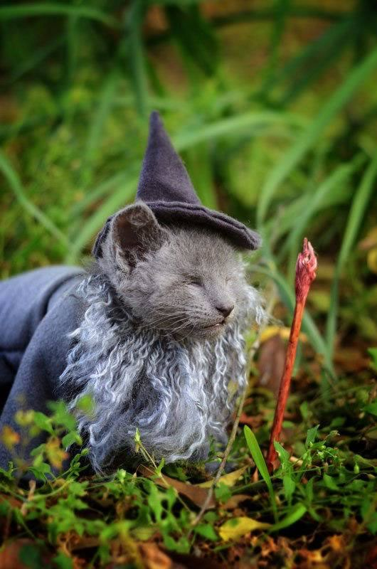 gatos disfrazados de personajes - gandalf - lord of the rings 01