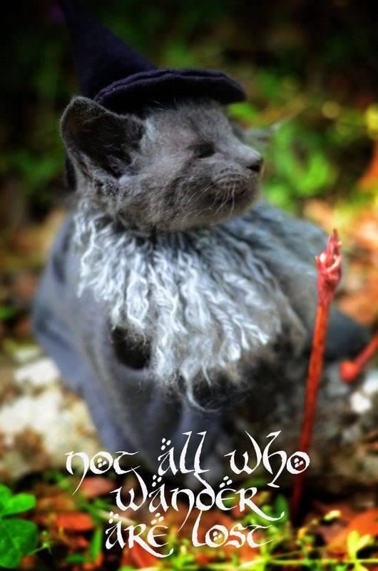 gatos disfrazados de personajes - gandalf - lord of the rings 02