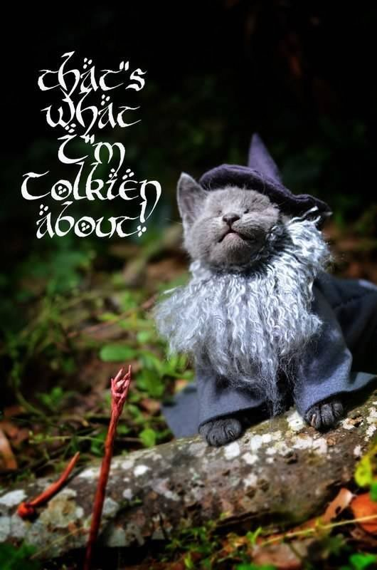 gatos disfrazados de personajes - gandalf - lord of the rings 04