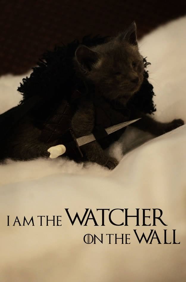 gatos disfrazados de personajes - jon snow - game of thrones 01