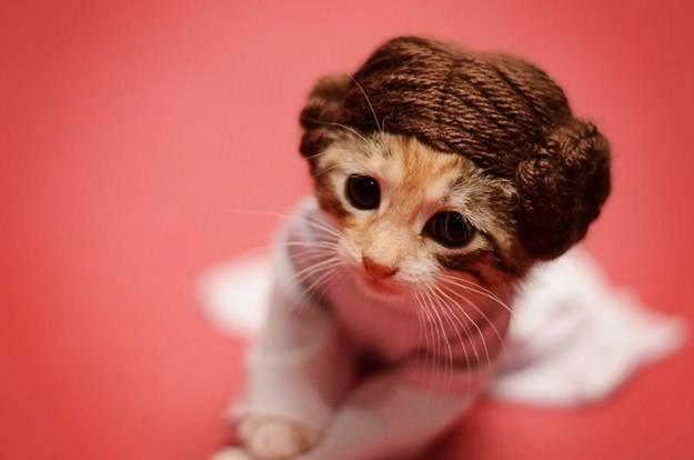 gatos disfrazados de personajes - princesa leia star wars 01