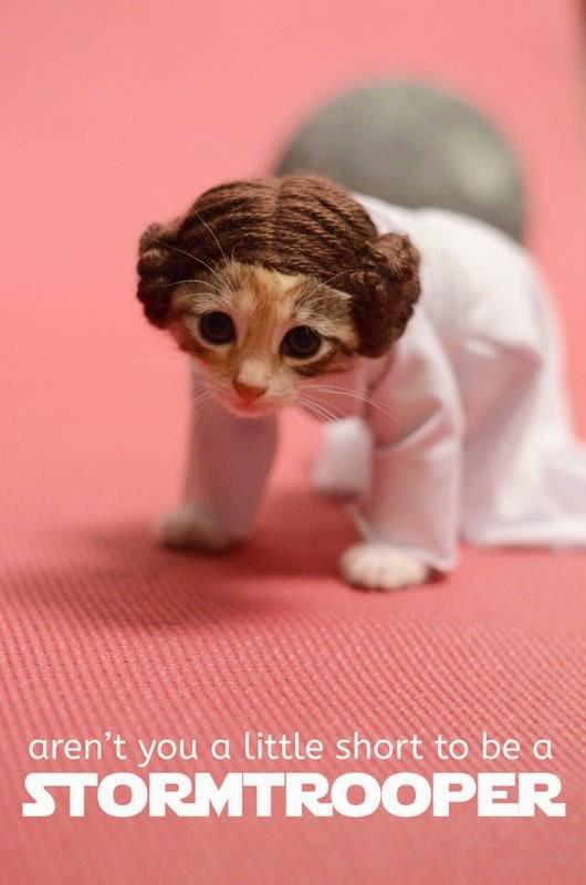 gatos disfrazados de personajes - princesa leia star wars 02