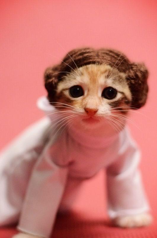 gatos disfrazados de personajes - princesa leia star wars 04