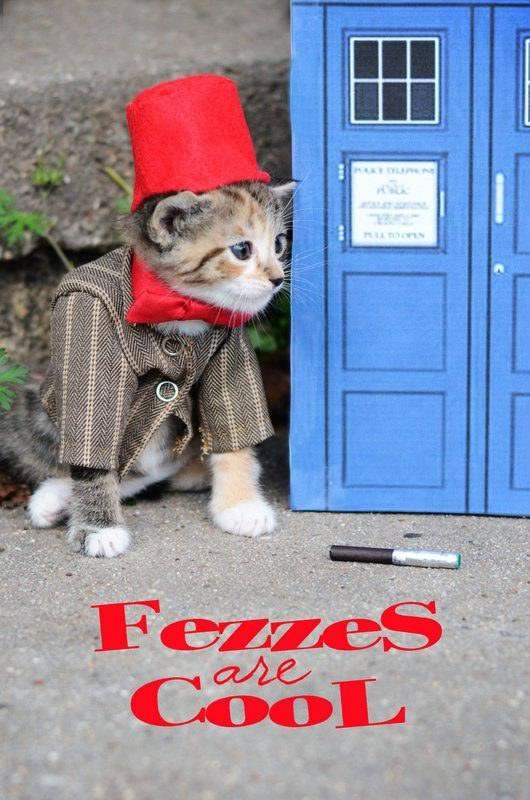 gatos disfrazados de personajes - undecimo doctor - doctor who 02