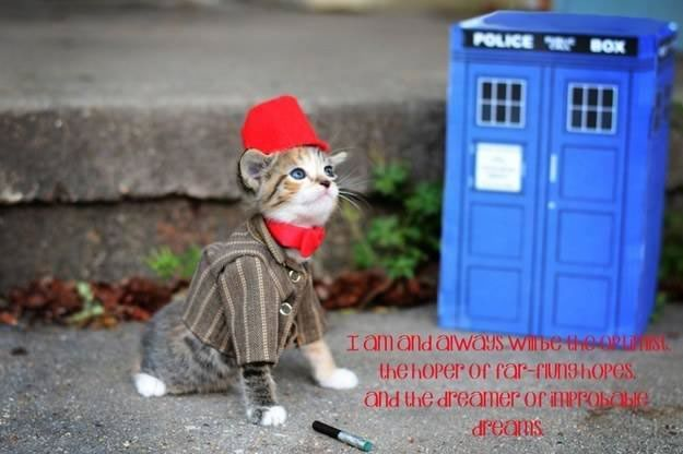 gatos disfrazados de personajes - undecimo doctor - doctor who 03