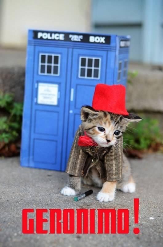 gatos disfrazados de personajes - undecimo doctor - doctor who 04