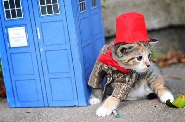 gatos disfrazados de personajes - undecimo doctor - doctor who