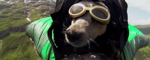 whisper perrita base jumping