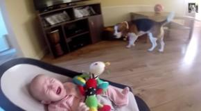 perrito hace llorar a bebe y luego se disculpa