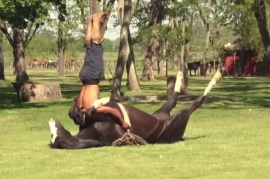 caballo hace yoga