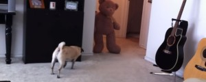no asustar a tu perro con un oso de peluche