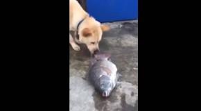 noble perro intenta salvar a un pez fuera del agua