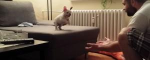 perrito confia en su amo para hacer esto