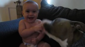 video de pitbull comiendose bebe a besos