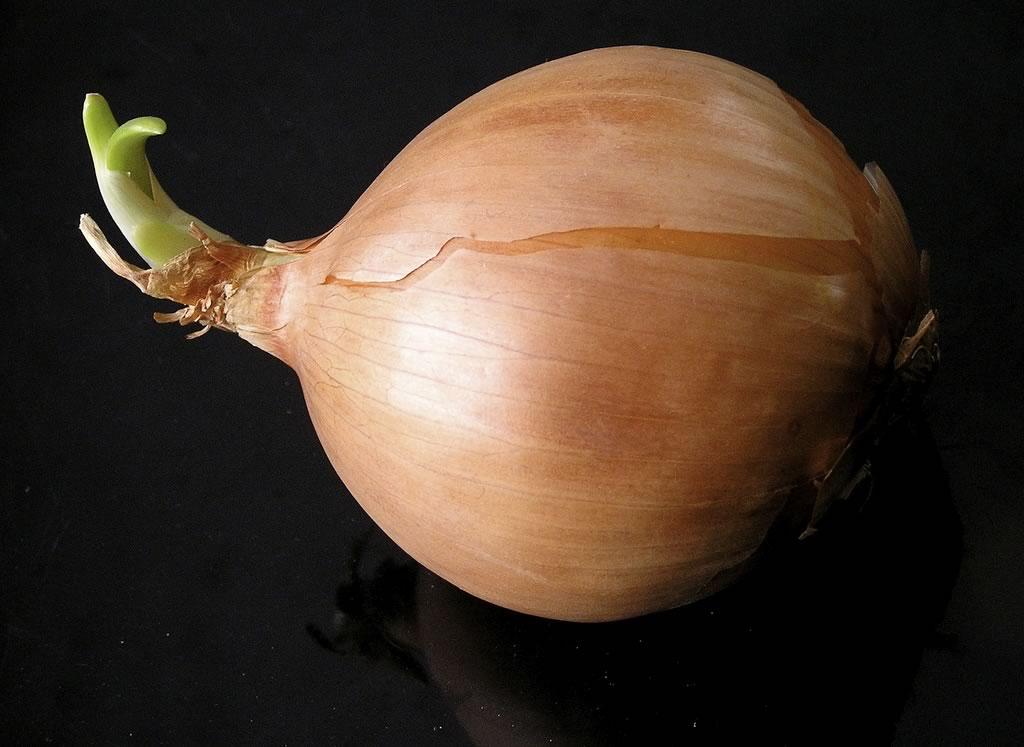 como hacer crecer el pelo muy rapido de manera casera - cebolla