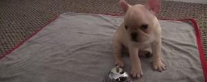 adorable perrito aprende trucos