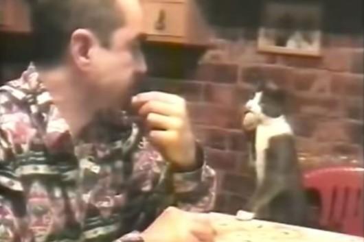gato habla por signos con su amo sordomudo
