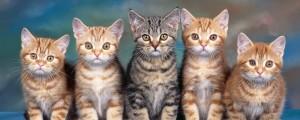 los 10 mejores videos de gatos que veras en toda tu vida