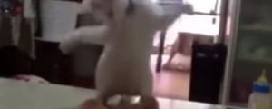 mama gata separa a gatitos que se pelean