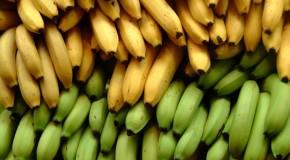 bananas convertidas en obras de arte