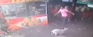 karma salva a perro