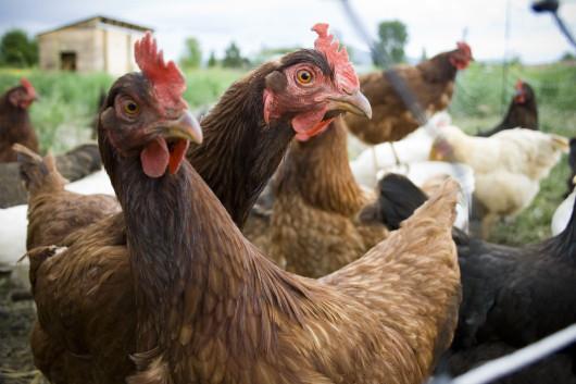 solucion problema del huevo y la gallina