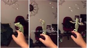 laura el camaleon que revienta burbujas de jabon