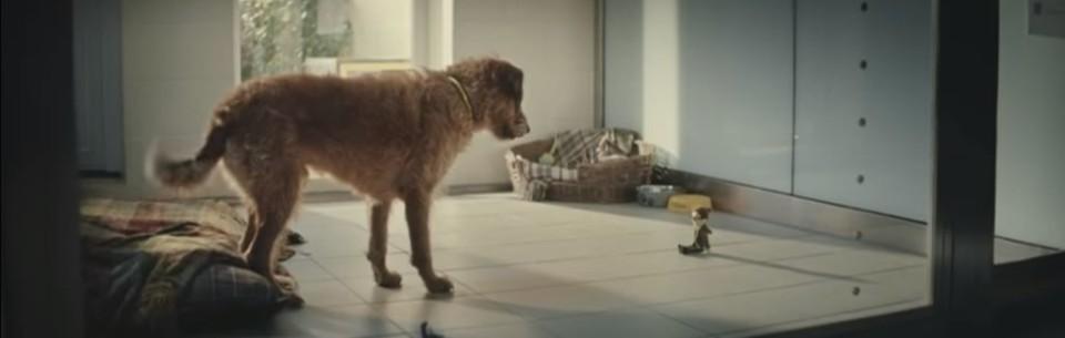 adopta un perrito y cambiale la vida